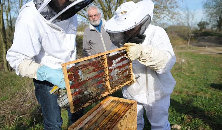 Exposition sur l'univers de l'apiculture