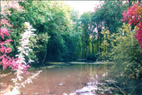 Bois du Moulin des Marais