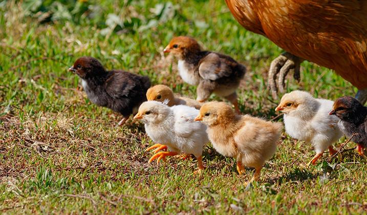 Sortie familiale à la ferme de Saint-Hilliers