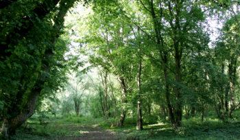 Travaux de sécurité dans l'Espace naturel régional du Moulin des Marais