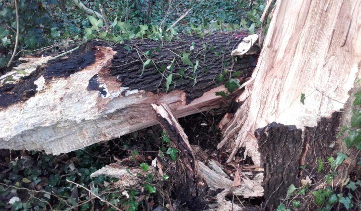 Coupe d'arbres dans le bois du Moulin des Marais