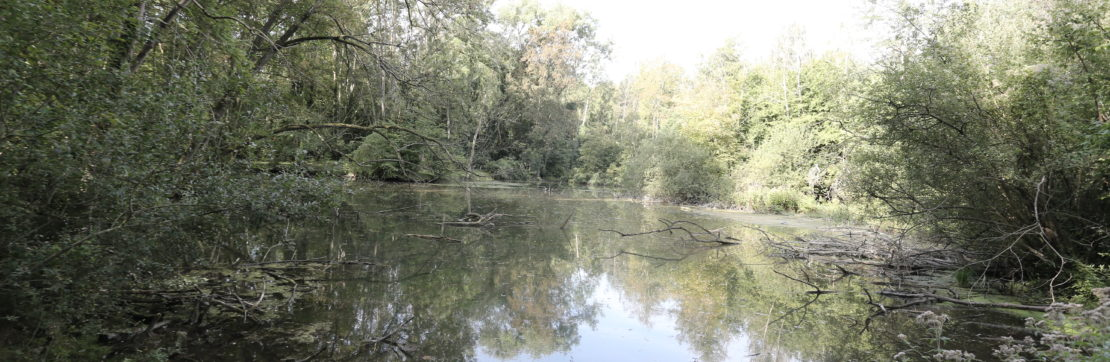 Pique-nique au bois du Moulin des Marais