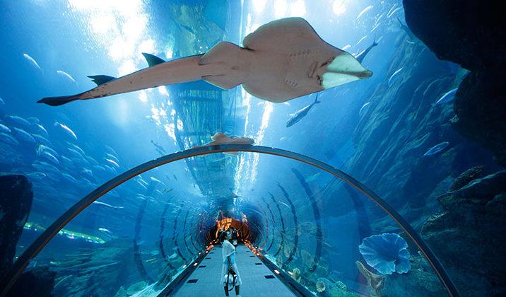 Sortie à l'aquarium Sea life de Serris
