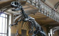Visite du musée national d'histoire naturelle avec le Club Âge d'Or