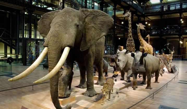 Sortie familiale à la Grande galerie de l'évolution